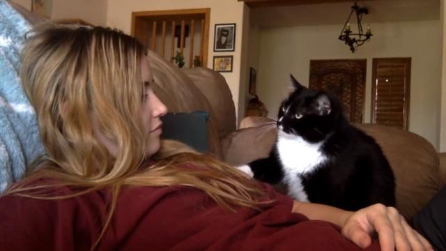 撫でるのをやめると「もっと撫でて」と催促、おねだりの仕草がかわいいネコ