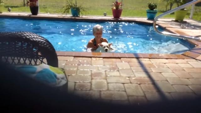これは笑える! プールから出そうとするおばあちゃんに必死に抵抗するワンコ