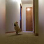 いったい何ごと!?|何かを叫びながら廊下を走り回る不可解なオウム