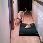 寝床を奪われた情けないワンちゃんと寝床に居座るふてぶてしいネコ(笑)