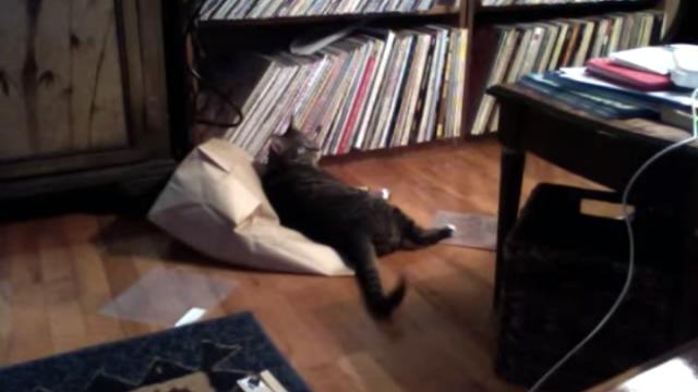 知っていながら知らぬふり、紙袋に仲間を封じ込める意地悪なネコ(笑)