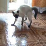 ワックス掛けをしたばかりの床の上でネコが威嚇のポーズをとった結果(笑)