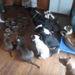 ご飯の準備が出来るまで「待て」の姿勢で大人しく待っている12匹のお利口なワンちゃんたち。