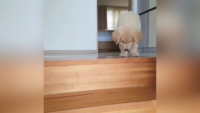 階段を降りるのが苦手なワンちゃん、克服にはまだまだ時間がかかりそう(笑)