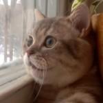 窓から外を眺めながら鼻歌を歌う真ん丸顔のかわいいネコ♡