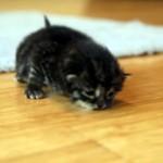 庭先に捨てられていた生後2週間の子猫。一生懸命歩こうとする姿が健気で愛おしい