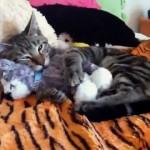 頬ずりをしたり抱き枕にしたり…、ぬいぐるみを愛してやまないネコの映像集