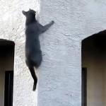 ネコってほんとにスゴイと思う瞬間の映像集