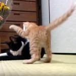先輩猫の隙を見て猫パンチをお見舞いする子猫。意外な展開に拍子抜け