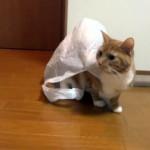袋から抜けられなくなり完全にトラップにハマってしまったネコ
