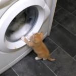 ドラム式洗濯機に興味津々なネコたちの映像集