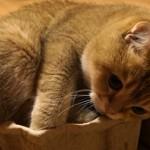 緩衝材の隙間に入ろうと一生懸命な猫。いくらなんでもこれは無理っぽい(笑)