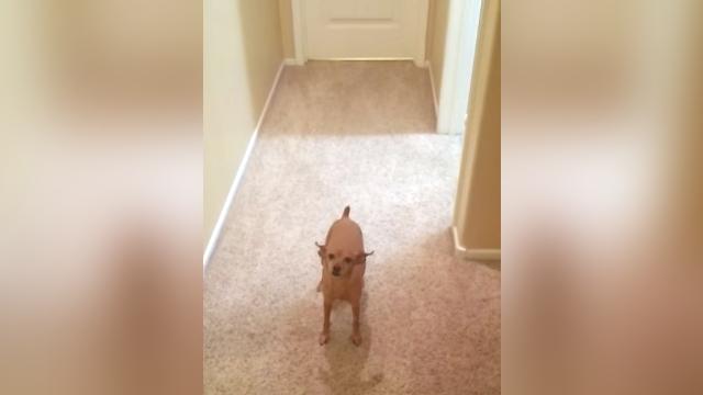 ルームメイトの愛犬が忠犬過ぎて、困った状況に陥った同室の男性