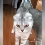 鏡に映る自分の姿に気が付いた瞬間、凍りついた猫
