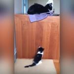 台の上に居る母猫の側に行きたくて一生懸命ジャンプする子猫