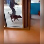 飼い主と2ヶ月ぶりの再会に喜びを爆発させる愛犬