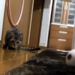 優れた身体能力と動体視力で高速シュートをセーブする天才猫ゴールキーパー