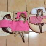 場所を選ばず何処でも寝ることができる猫たち 25枚