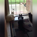 庭に居る小鳥を見つめる3匹の猫たち。まさかの事態に大パニック