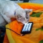 飼猫にスマホの子猫の鳴き声(着信音)を聞かせてみた結果…
