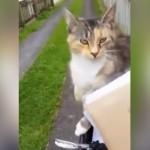 郵便配達員に毎日会いに来るフレンドリーな猫