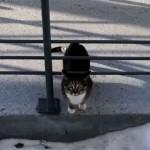 外から帰ってくると、変わった方法で家の中に入るネコ(笑)