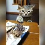 怒られるとわかっていても、ついつい魚に手が出てしまう猫(笑)