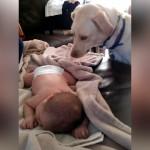 寝ている赤ちゃんに毛布を掛けてあげる優しい犬
