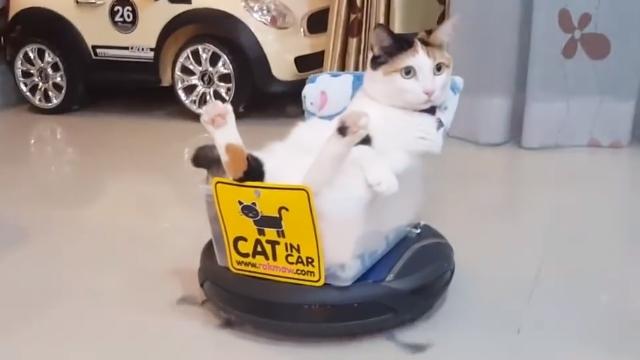 ルンバを快適に乗りこなす猫のシュールな光景