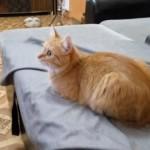 いつになく真剣な眼差しで一点を見つめる猫。その視線の先には・・・