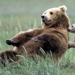 厳しい自然界で生きるクマの親子の微笑ましい光景 25枚