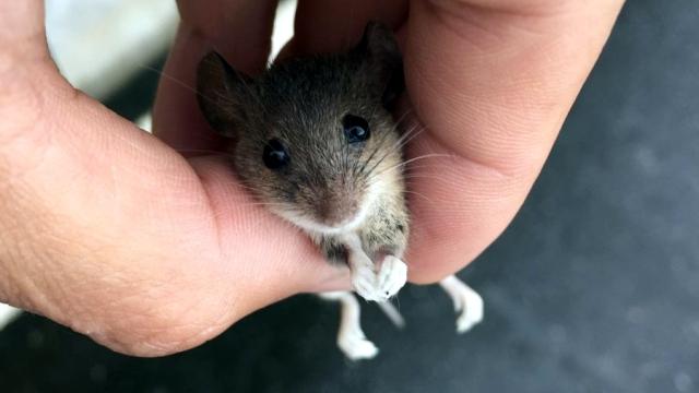 ホームセンターで起きたネズミに纏わるエピソード