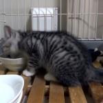 無心にご飯を食べる子ネコ。あまりの美味しさに思わず・・・