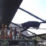 干し竿にのぼって干し魚を盗もうと悪戦苦闘するドラ猫(笑)