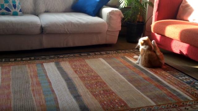 毛づくろいをしながら寛いでいるネコ → 突然不可解な行動に(笑)
