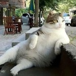 独特のポーズで世界中の人々を笑顔にした猫が虹の橋へ → 銅像となって永遠に生き続ける