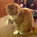 手にくっついたマシュマロが取れず悪戦苦闘する猫(笑)