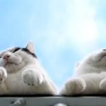 天高く猫も肥ゆる秋。物思いにふけるふっくら顎の可愛い猫