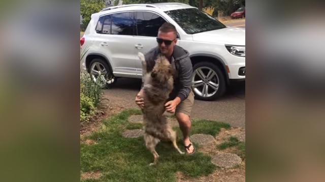 8ヶ月ぶりに帰ってきた飼い主と再会、全身で喜びをあらわにする愛犬