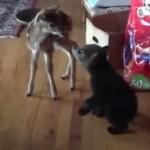 初めてのご対面!|子鹿の警戒心を解こうと一生懸命愛嬌を振りまく子グマ♡