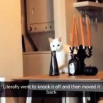 花瓶を落とそうとして飼い主に見られてしまった猫の意外な反応