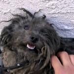 飼い主に置き去りにされボロボロになった犬を保護した結果