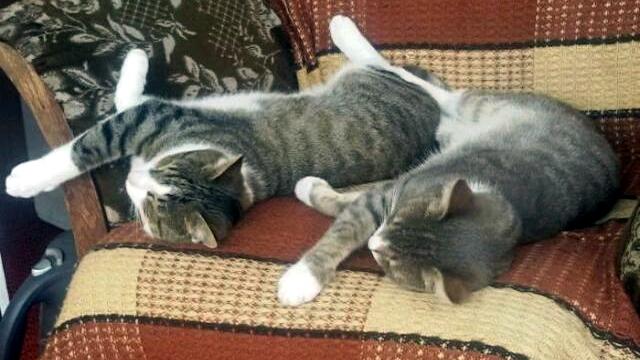 同じポーズで可愛さ倍増!?|シンクロ猫のかわいい写真集 24選