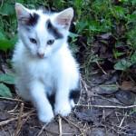 前足を骨折して痛そうに歩み寄る野良の子猫。保護して10日経つと…