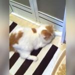 前転すると浴室のドアが開くと勘違いし、前転を繰り返す猫(笑)