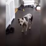何処に居てもやって来る、ビスケットのブリキ缶の蓋を開ける音に敏感な犬