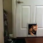 大家から猫専用ドアの取り付けを断られた男性が考えた奇抜なアイデア
