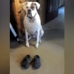 飼い主の靴の前でお座りをする愛犬、予想外の行動に…