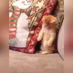 自分の足をみてビックリ!動揺が止まらない奇妙な子猫
