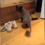 飼い主にヘアを短くカットされ、不満をあらわにする猫(笑)